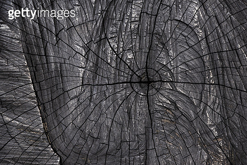 Black veins image from top view of burnt stump. - gettyimageskorea