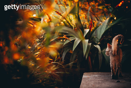 Cat Walking By Plants During Autumn - gettyimageskorea