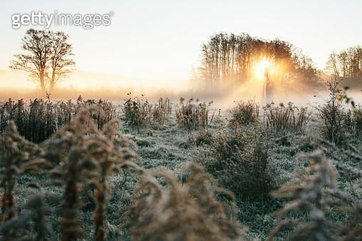Foggy meadow - gettyimageskorea