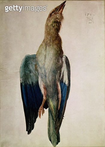 <b>Title</b> : Blue Crow, 1512 (w/c & gouache on vellum)<br><b>Medium</b> : watercolour and gouache on vellum<br><b>Location</b> : Graphische Sammlung Albertina, Vienna, Austria<br> - gettyimageskorea