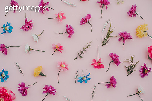 spring flowers background in pink.Flat lay - gettyimageskorea