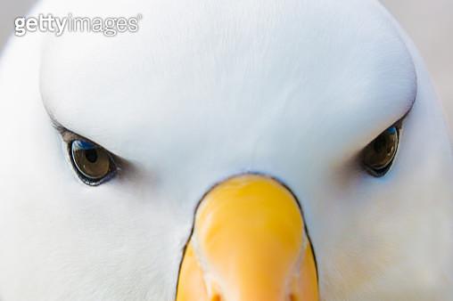 , Falkland Islands, United Kingdom - gettyimageskorea