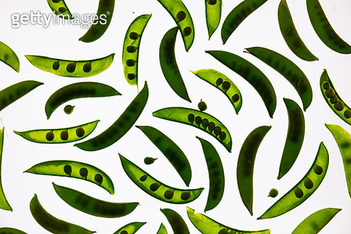 Abstract snap peas arranged on a translucent background - gettyimageskorea
