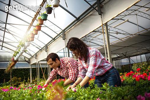 Working in a winter greenhouse farm - gettyimageskorea