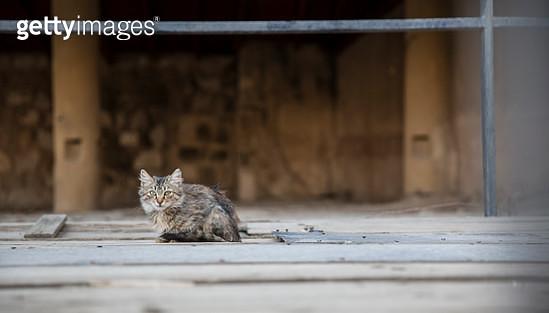Stray cat in Amman, Jordan - gettyimageskorea