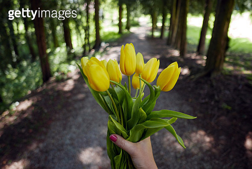 Cropped Hand Of Woman Holding Yellow Tulips At Park - gettyimageskorea