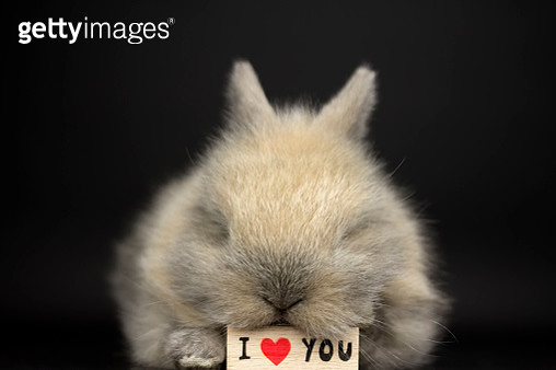 Rabbit in love - gettyimageskorea