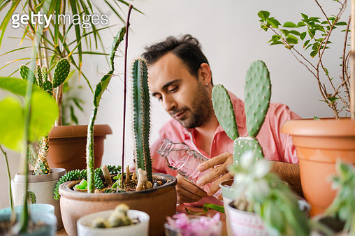 Lifestyle photos of a young adult man taking care his indoor plant garden. - gettyimageskorea
