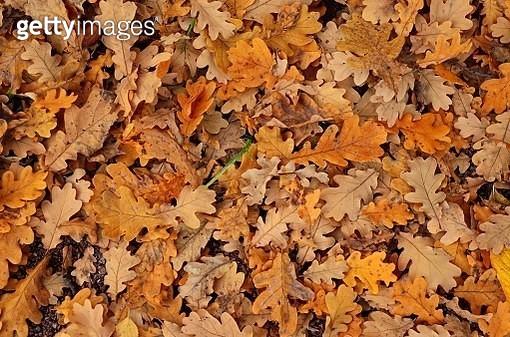 October pattern - gettyimageskorea