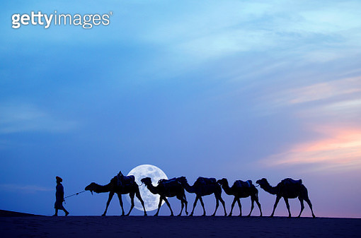 Merzouga region, Tuareg Cael guide with his camel train with large moon. - gettyimageskorea