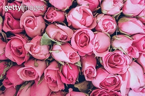 Close-Up of Pink Roses Bouquet - gettyimageskorea