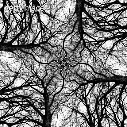 Abstract symmetrical composite of elm trees. - gettyimageskorea