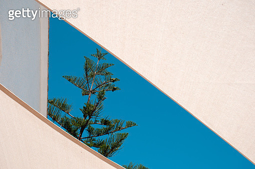 Norfolk Island Pine tree branches framed by cream sunsails in bright sunlight on a clear blue sky background in summertime. - gettyimageskorea