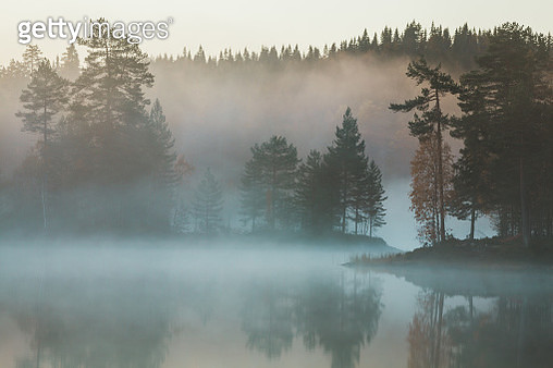 This image was take one October morning in a forest close to Drammen, Norway. - gettyimageskorea