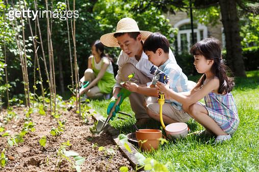 Happy family in the garden vegetables - gettyimageskorea