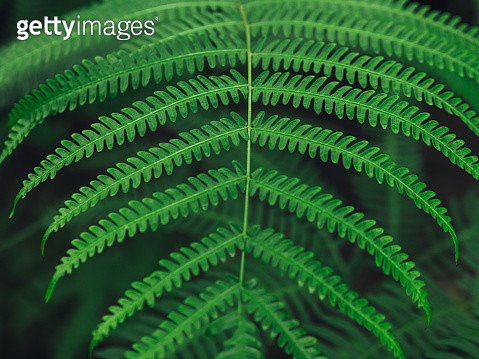 High Angle View Of Fern In Forest - gettyimageskorea