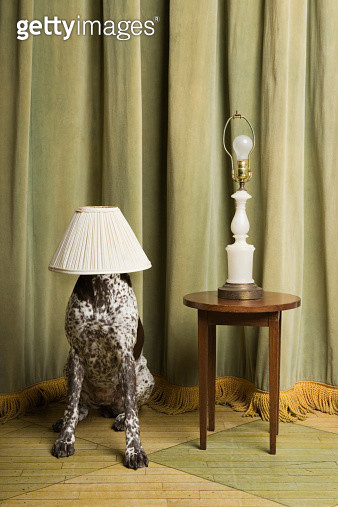 Dog with a lampshade on its head - gettyimageskorea