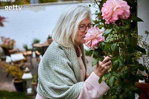 Senior woman smelling at rose in garden - gettyimageskorea