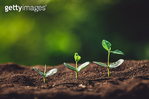 Close-Up Of Seedlings Growing On Field - gettyimageskorea