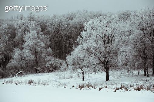 Winter 2 - gettyimageskorea