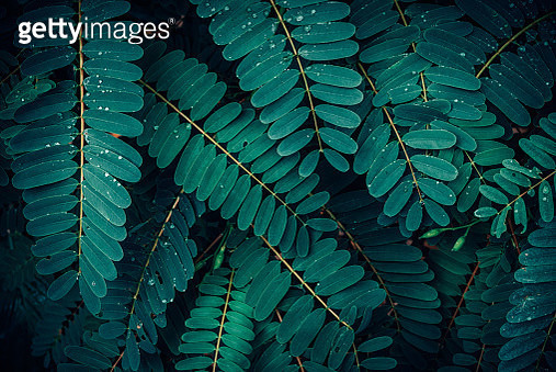 Green Leaves Pattern Background, Natural Lush Foliages of Leaf Texture Backgrounds. - gettyimageskorea