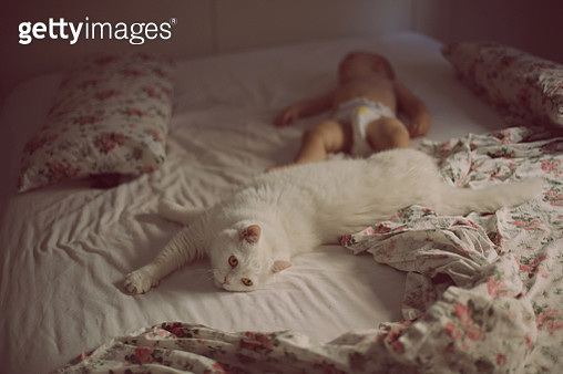 Baby boy sleeping in bed next to the cat - gettyimageskorea