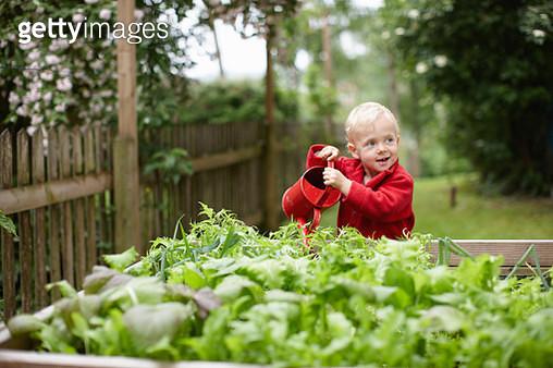 Toddler boy watering plants in backyard - gettyimageskorea