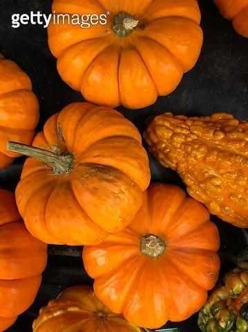 Octoberfest - gettyimageskorea