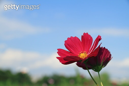 Look up at the blue sky - gettyimageskorea