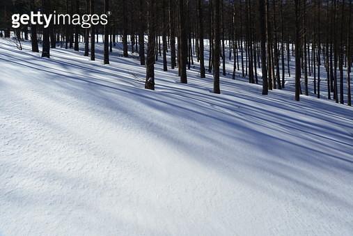 겨울 숲 이미지 - gettyimageskorea