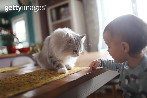 A 18 months old baby boy with his cat at home - gettyimageskorea