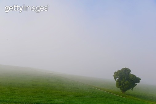 Scenic View Of Landscape Against Sky During Foggy Weather - gettyimageskorea