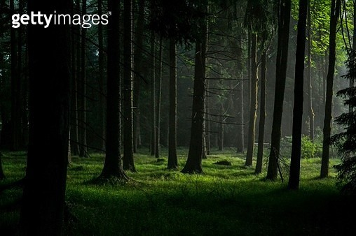 a forest - gettyimageskorea
