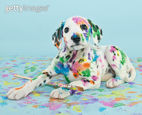 Painted puppy - gettyimageskorea