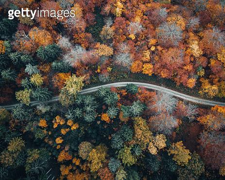 Herbstlicher Wald von oben - gettyimageskorea