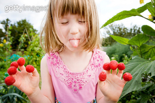 Girl (5-6) with rasberries on fingers,pulling her tongue out to camera, vegetable garden - gettyimageskorea