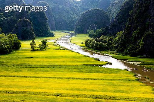 The Golden Fields Inside A Natural Reserve. - gettyimageskorea