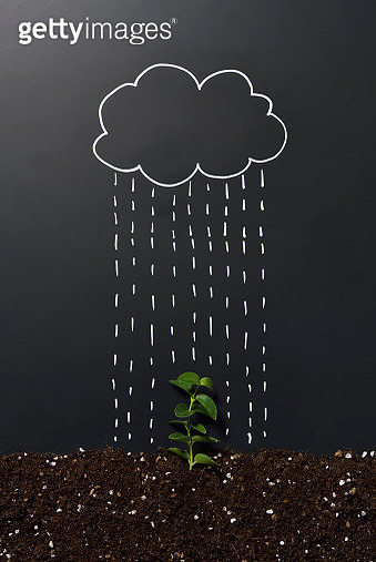 Little sprout and rain - gettyimageskorea