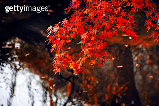 Photo by: 墨 染 - gettyimageskorea