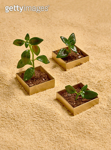 Three golden boxes over sand with green sprouts growing from them - gettyimageskorea