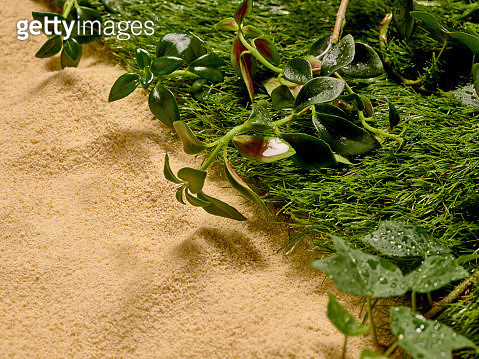 Sand covering half of the image while grass and green foliage cover the other half. - gettyimageskorea