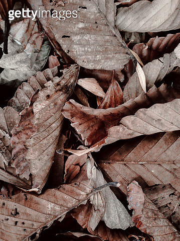 Close-Up Of Dried Leaves On Wood - gettyimageskorea