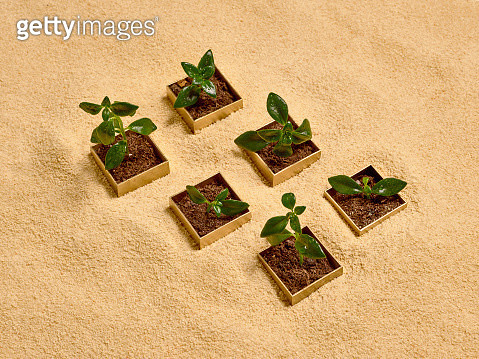 Six golden boxes over sand with green sprouts growing from them - gettyimageskorea