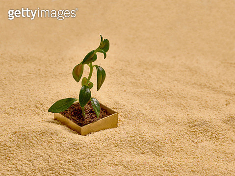 One golden box over sand with a green sprout growing from it - gettyimageskorea