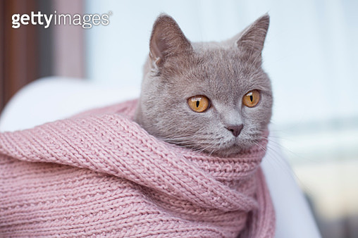Little cat with wool scarf - gettyimageskorea