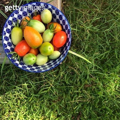 Directly Above Shot Of Tomatoes In Bowl On Grassy Field - gettyimageskorea