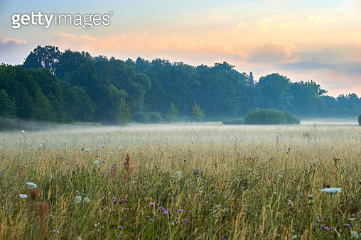 Sunrise Over A Scenic Meadow With Natural Flowers. Vivid Colors With Dramatic Clouds And Fog.... - gettyimageskorea