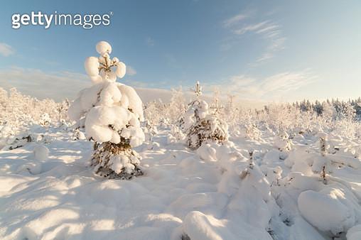 Trees in the field in the winter. - gettyimageskorea