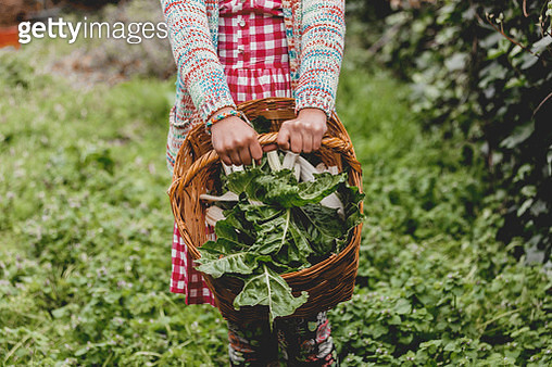 hands  holding basket with fresh green  vegetables - gettyimageskorea