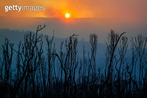 Sunset over burnt mountain landscape with smoke and leafless plants after forest fire, bushfire in Blue Mountains, Australia - gettyimageskorea